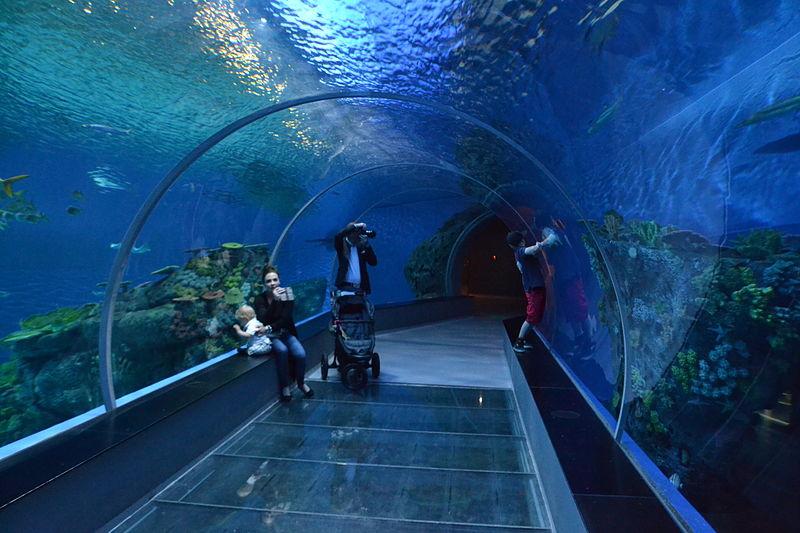 tunnel dell'acquario di Copenaghen