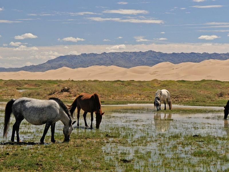 Paesaggi della Mongolia